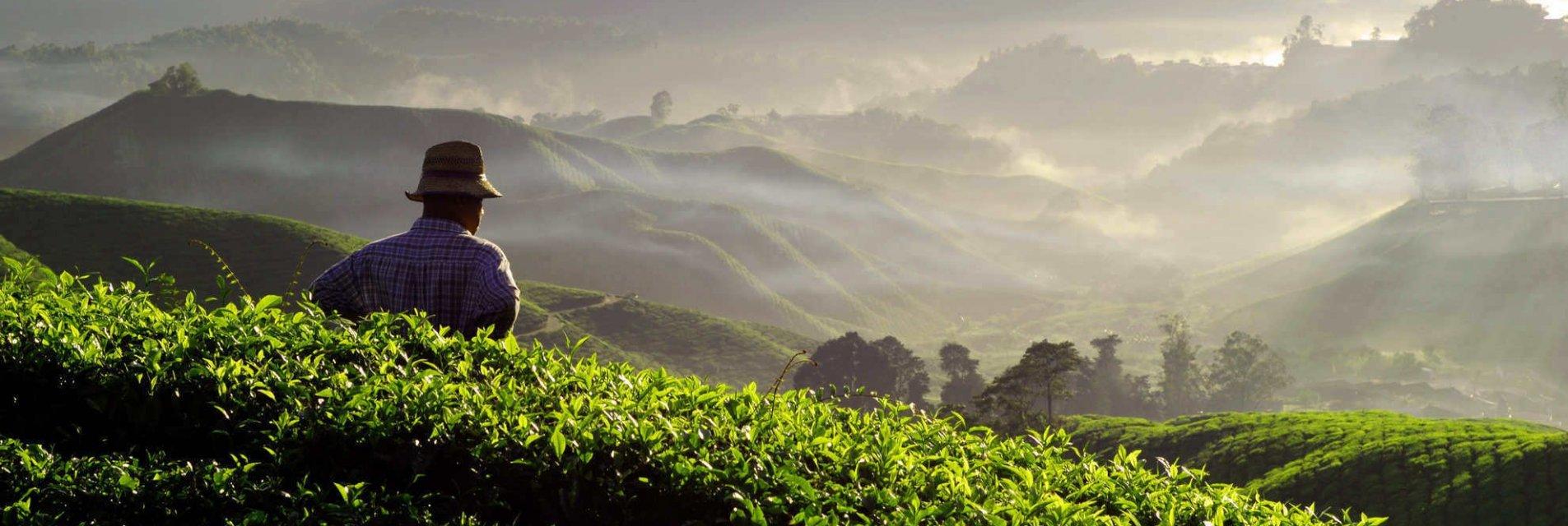 Sostenibilità per i produttori di caffè Brasilmoka